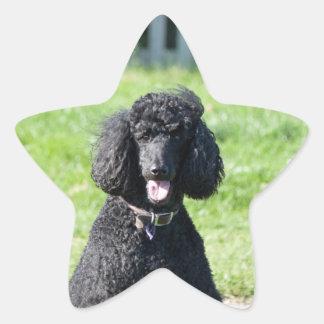 Standard Poodle dog black beautiful photo portrait Star Sticker