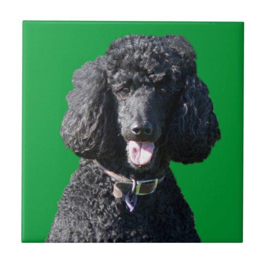 Standard Poodle dog black beautiful photo portrait Tile