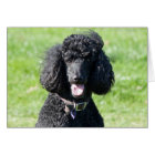 Standard Poodle dog black photo blank note card