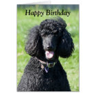 Standard Poodle dog photo happy birthday card