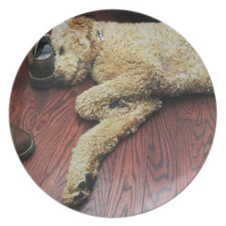 Standard Poodle Sleeping on Floor Party Plates