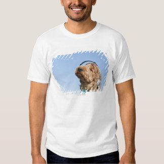 Standard Poodle Tshirt