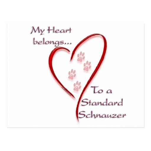 Standard Schnauzer Heart Belongs Postcard