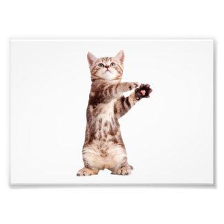 Standing cat - kitty - pet - feline - pet cat photo art