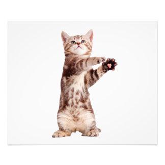 Standing cat - kitty - pet - feline - pet cat photo print