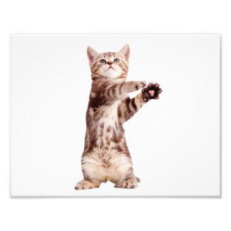 Standing cat - kitty - pet - feline - pet cat photograph