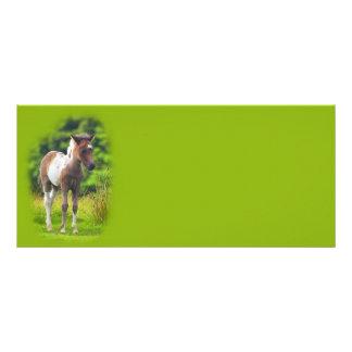 Standing Dartmoor Pony Foal rack cards