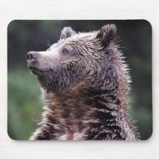 Standing Grizzly Bear Mouse Mat