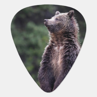 Standing Grizzly Bear Plectrum
