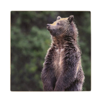 Standing Grizzly Bear Wood Coaster