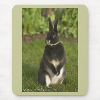 Standing Rex Rabbit Mouse Mat