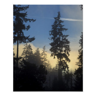 Stanley Park, woods, marine layer fog rolling in Poster