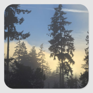Stanley Park, woods, marine layer fog rolling in Square Sticker