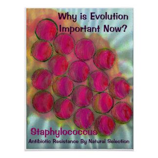 Staph - Evolution by Natural Selec... - Customized Poster