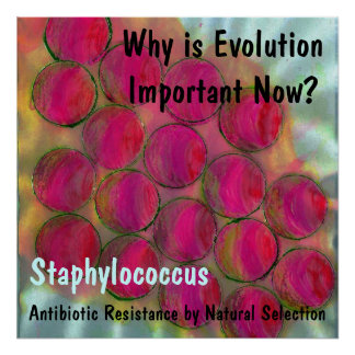 Staph, Why is Evolution Important Now?, Staphyl... Poster