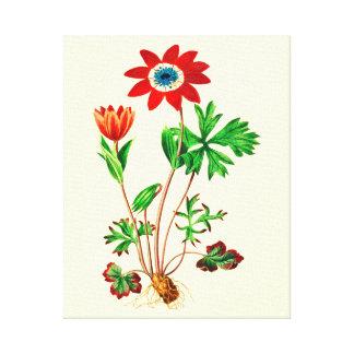 Star Anemone Canvas Print