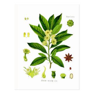 Star anise postcard