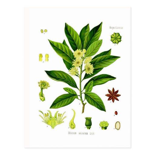 Star anise postcards