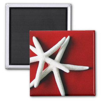 Star fish Magnet