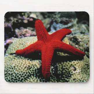 Star Fish | Red Sea Mouse Mat