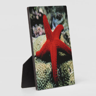 Star Fish | Red Sea Plaque