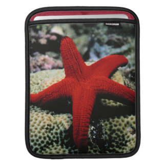Star Fish | Red Sea Sleeve For iPads