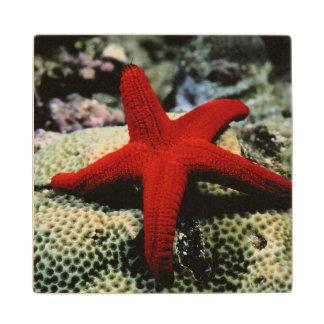 Star Fish | Red Sea Wood Coaster