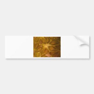 star fruit bumper sticker