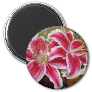 Star Gazer Lily Round Magnet