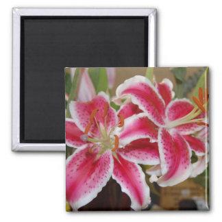 Star Gazer Lily Square Magnet