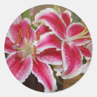 Star Gazer Lily Sticker