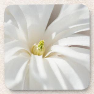 Star Magnolia Coaster