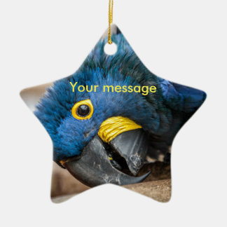 Star Ornament of cute Hyacinth Macaw parrot