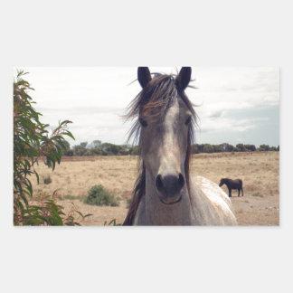 Star_The_Horse,_ Rectangular Sticker