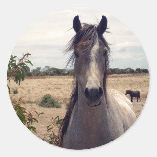 Star_The_Horse,_ Round Sticker