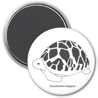 Star Tortoise Magnet (#9 bw)