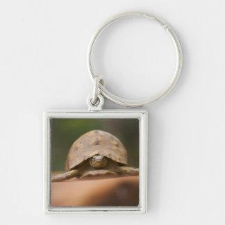 Star tortoise, Perinet Reserve, Madagascar Key Ring