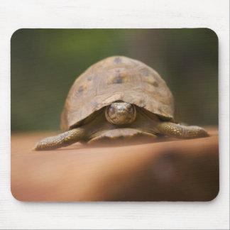 Star tortoise, Perinet Reserve, Madagascar Mouse Mat
