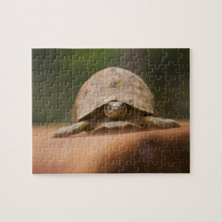 Star tortoise, Perinet Reserve, Madagascar Puzzles