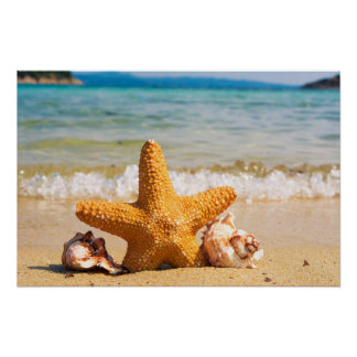 Starfish and Seashells on the Beach Poster