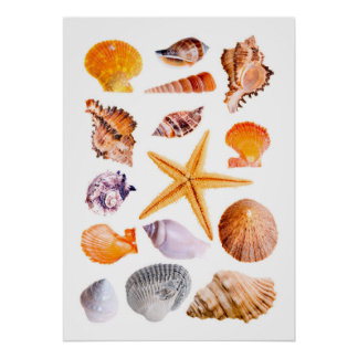 Starfish and Shells Print Poster