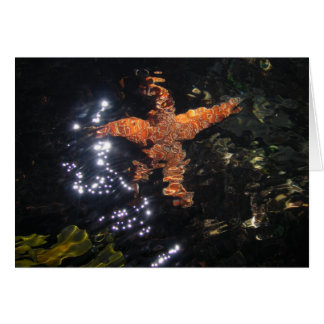 Starfish at Tidepool Card