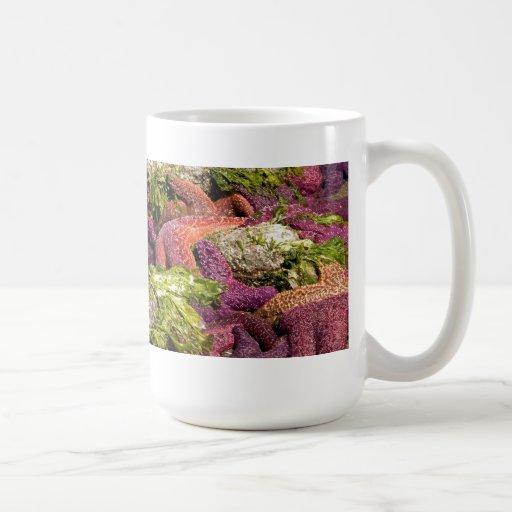 Starfish Closeup Photo Coffee Mugs