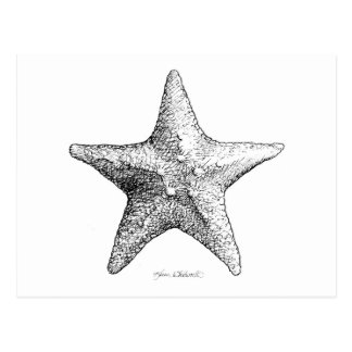 Starfish Drawing Black & White Sea Star Art Postcard