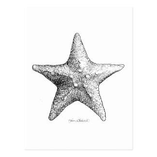 Starfish Drawing Black & White Sea Star Art Postcard