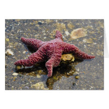 Starfish Huggin an Oyster Greeting Card