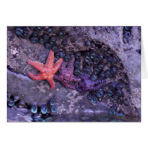 Starfish in Multiple Colours at Ruby Beach, WA Greeting Card
