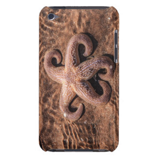 Starfish  iPod Touch Barely There Case