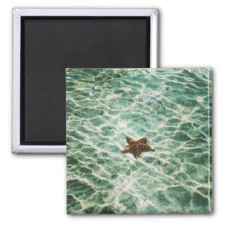 Starfish Island Magnet
