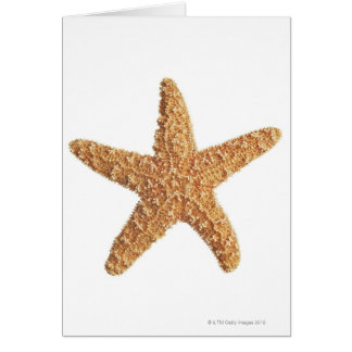 Starfish isolated on white card